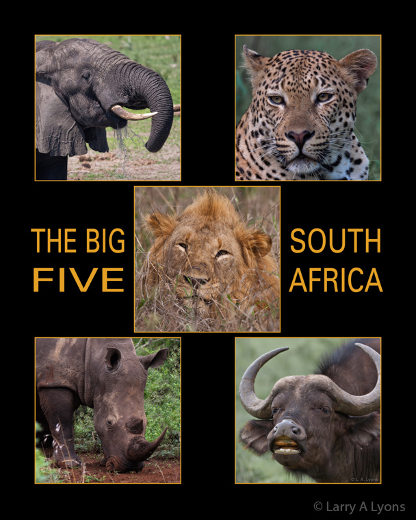 The Big Five of South Africa  © Larry A Lyons