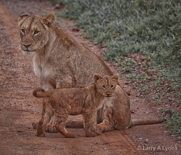 'Mother and Cub' © Larry A Lyons