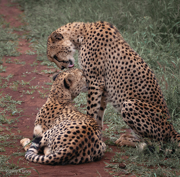 'Brotherly Love' © Larry A Lyons