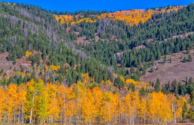'Aspens Accenting The Landscape' © Larry A Lyons