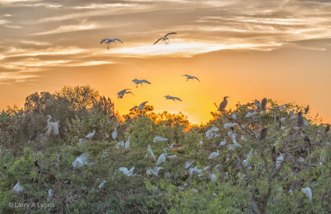 Sunset Over Venice Rookery